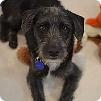 Adopt A Pet :: Wally - Los Angeles, CA