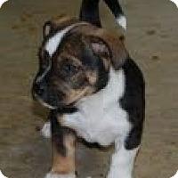 Adopt A Pet :: Beck - Staunton, VA