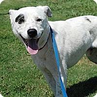 Adopt A Pet :: Petey - Justin, TX