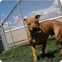 Adopt A Pet :: Mulligan - Meridian, ID