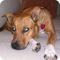 Adopt A Pet :: Sienna - Justin, TX