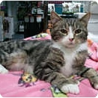 Adopt A Pet :: Donovan - Anchorage, AK