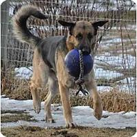 Adopt A Pet :: Sherman - Hamilton, MT