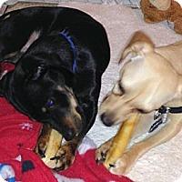 Adopt A Pet :: ANN & DAN - Portland, OR