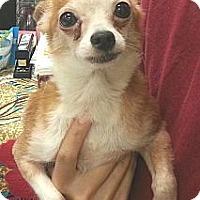 Adopt A Pet :: Shrimp - geneva, FL