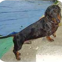 Adopt A Pet :: Alfie - Miami, FL