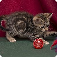 Adopt A Pet :: Dusty - Fountain Hills, AZ