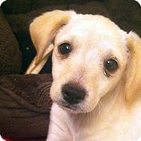 Adopt A Pet :: Monty - La Quinta, CA
