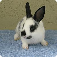 Adopt A Pet :: Jessie - Bonita, CA
