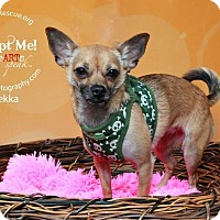 Adopt A Pet :: Bekka - Shawnee Mission, KS