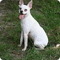 Adopt A Pet :: Prisey - Lufkin, TX