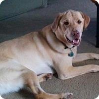 Adopt A Pet :: Comet - Toledo, OH