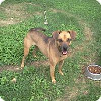 Adopt A Pet :: Lacey - Sherman, CT