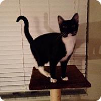 Adopt A Pet :: Tucker (2635-T) - Tampa, FL