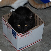 Adopt A Pet :: Luna - Daleville, AL