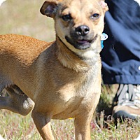 Adopt A Pet :: Milo-Adoption Pending - Pinehurst, NC