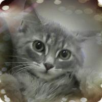 Adopt A Pet :: Taco - Trevose, PA