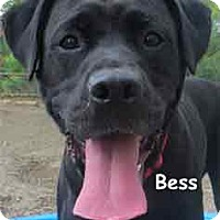 Labrador Retriever Mix Dog for adoption in Warren, Pennsylvania - Bess