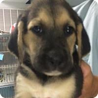 Adopt A Pet :: Tori - Barnegat, NJ