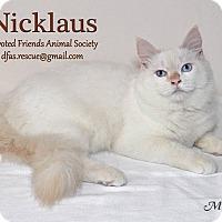 Adopt A Pet :: Nicklaus - Ortonville, MI