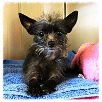 Adopt A Pet :: Peppermint Patty - Los Alamitos, CA