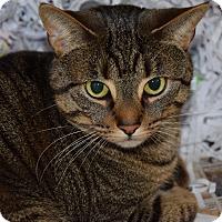 Adopt A Pet :: Bonnie - Pottsville, PA