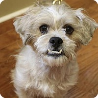 Adopt A Pet :: Finley - Chester Springs, PA