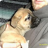 Adopt A Pet :: Atara - Dundas, VA