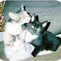 Adopt A Pet :: Zoey's kittens - cincinnati, OH