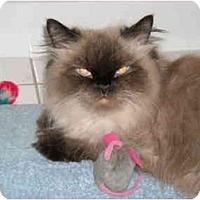 Adopt A Pet :: Sierra - Arlington, VA