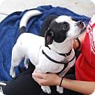 Adopt A Pet :: Peppermint