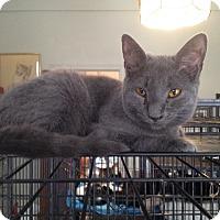 Adopt A Pet :: Emma - Orillia, ON