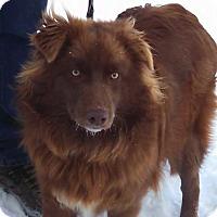 Adopt A Pet :: River - Elk River, MN