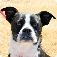 Adopt A Pet :: DOLLY - North Augusta, SC