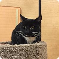 Adopt A Pet :: Fernando - Monroe, GA