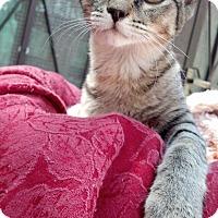 Adopt A Pet :: Ruthie - Scottsdale, AZ