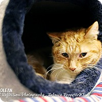 Adopt A Pet :: Napoleon - Appleton, WI