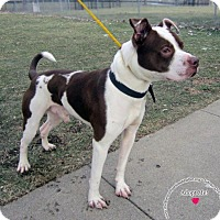 Adopt A Pet :: Bandit - Sidney, OH