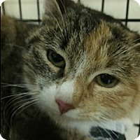 Adopt A Pet :: Susy - Forest Hills, NY