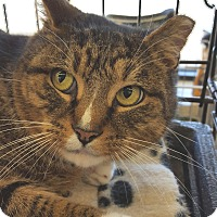 Adopt A Pet :: Cyrus - E. Claridon, OH
