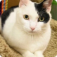 Adopt A Pet :: Jordan-PLAYFUL & SWEET - Naperville, IL