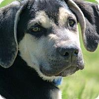 Adopt A Pet :: FRANK AND FAE - EDEN PRAIRIE, MN