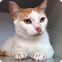Adopt A Pet :: Mike-Ellie - Los Angeles, CA