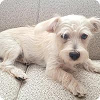 Adopt A Pet :: Max - Brea, CA
