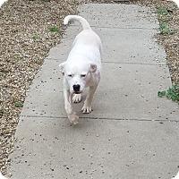 Adopt A Pet :: Casper - Des Moines, IA