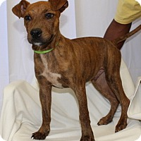 Adopt A Pet :: Elliott - Willingboro, NJ