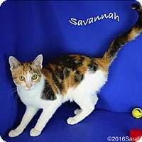 Adopt A Pet :: Savannah - Sherwood, OR