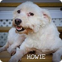 Adopt A Pet :: HOWIE - BROOKSVILLE, FL