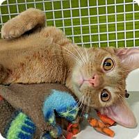 Adopt A Pet :: Chandler - Chesapeake, VA