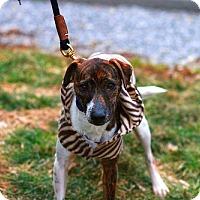 Adopt A Pet :: Rescue Gavin - Batavia, NY